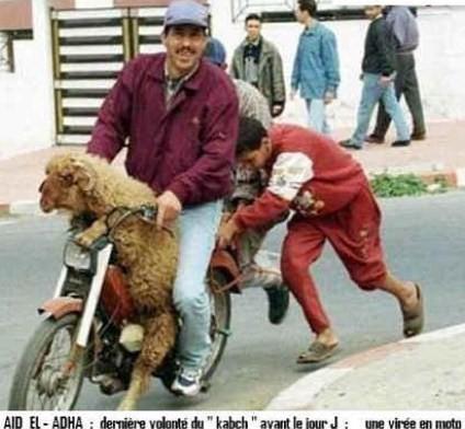 kabch-aide-algerie.jpg